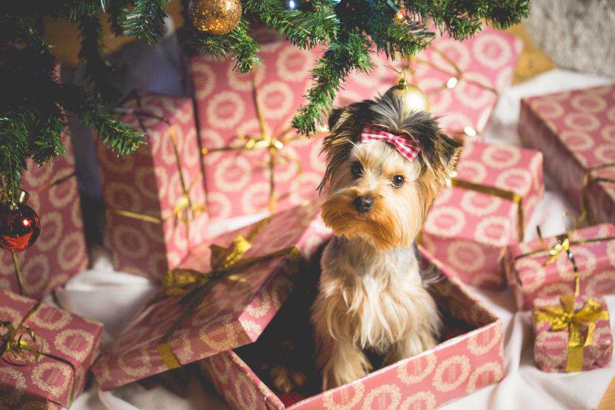 Weihnachten 2020 - Berlin Onlinemarketing